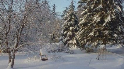 christmas-2013-244