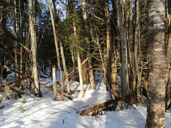 Winter 16-17 014