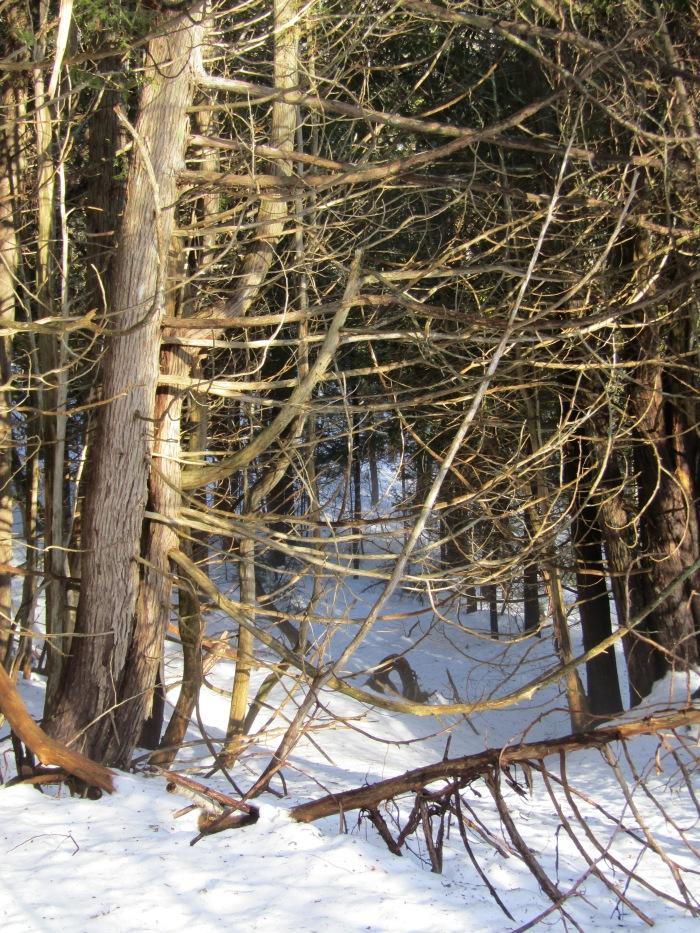 Winter 16-17 019