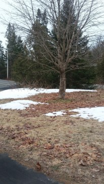 Patches-of-Snow-In-Spring