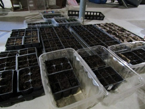 Seed-Trays